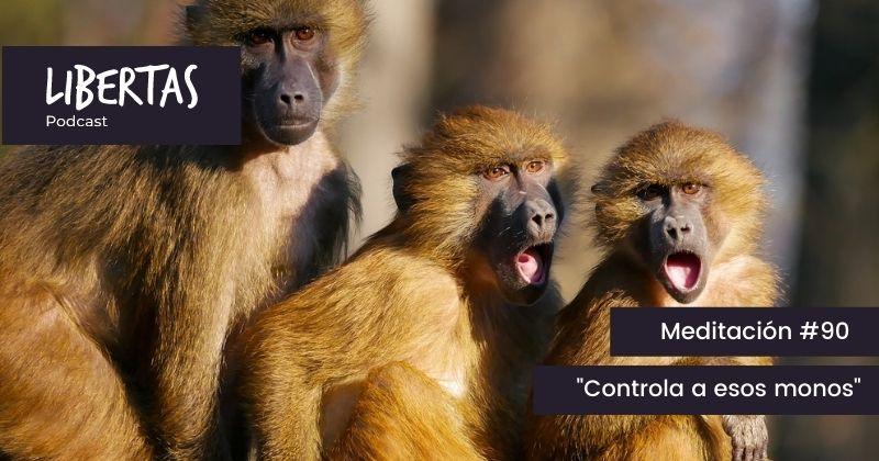 Controla a esos monos (#90) - agustinblanco.com